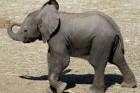 פילים, פילון