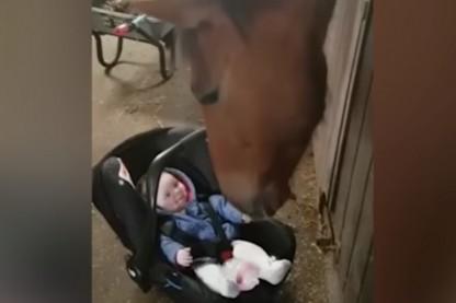 סוס בייביסיטר