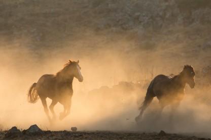 פרסה, סוסים