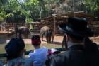 גן החיות, בין הזמנים