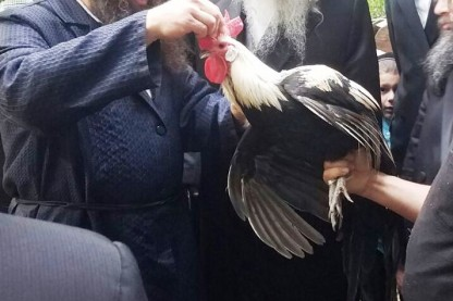 בראקל, עוף