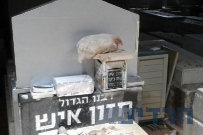 תרנגול, קבר החזון איש