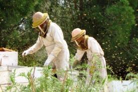 דבוראים