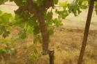 עצים נכרתו, בקעת הירדן