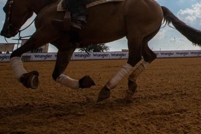 רוכב סוסים