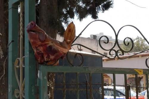 ראש חזיר
