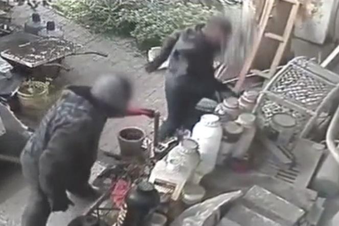 גנבים